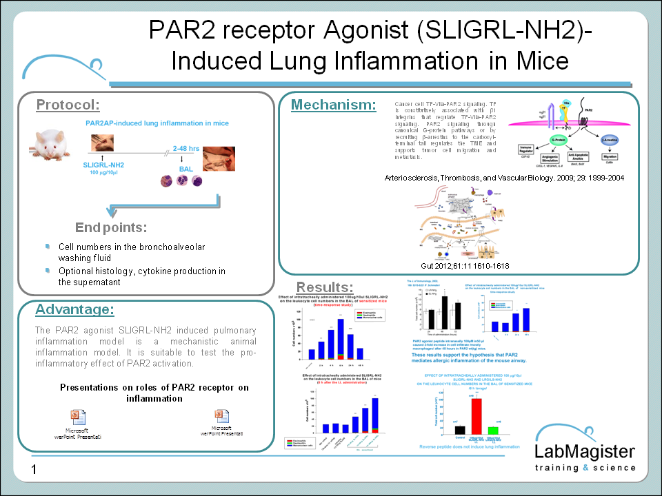 PAR2 agonist induced lung inflammation in mice