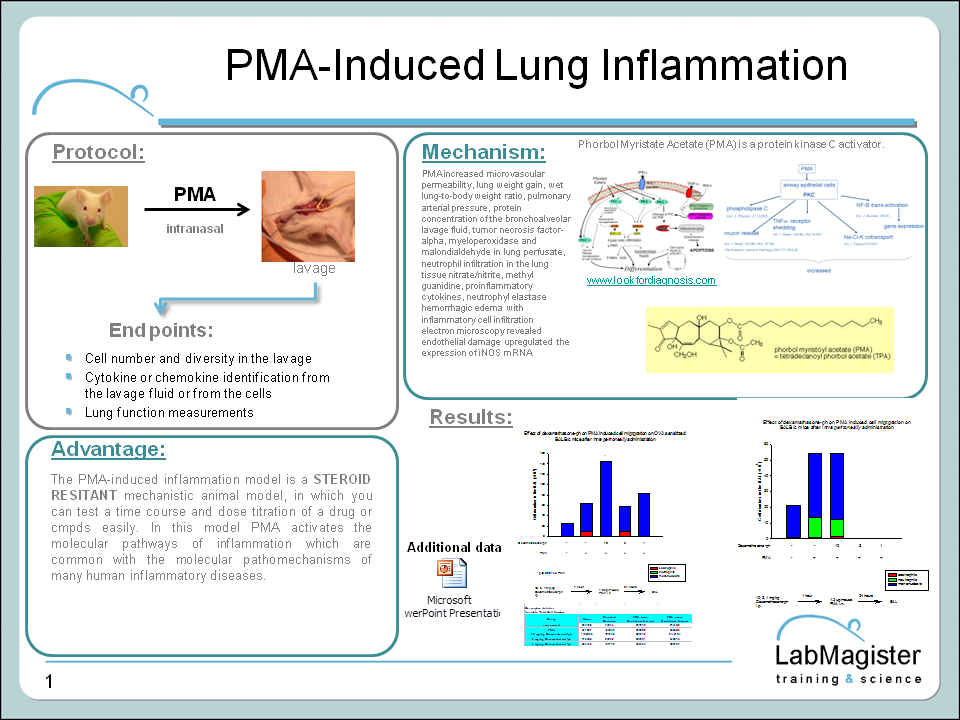 PMA induced lung inflammation