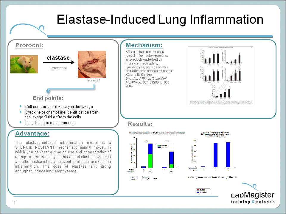 elastase-induced lung inflammation