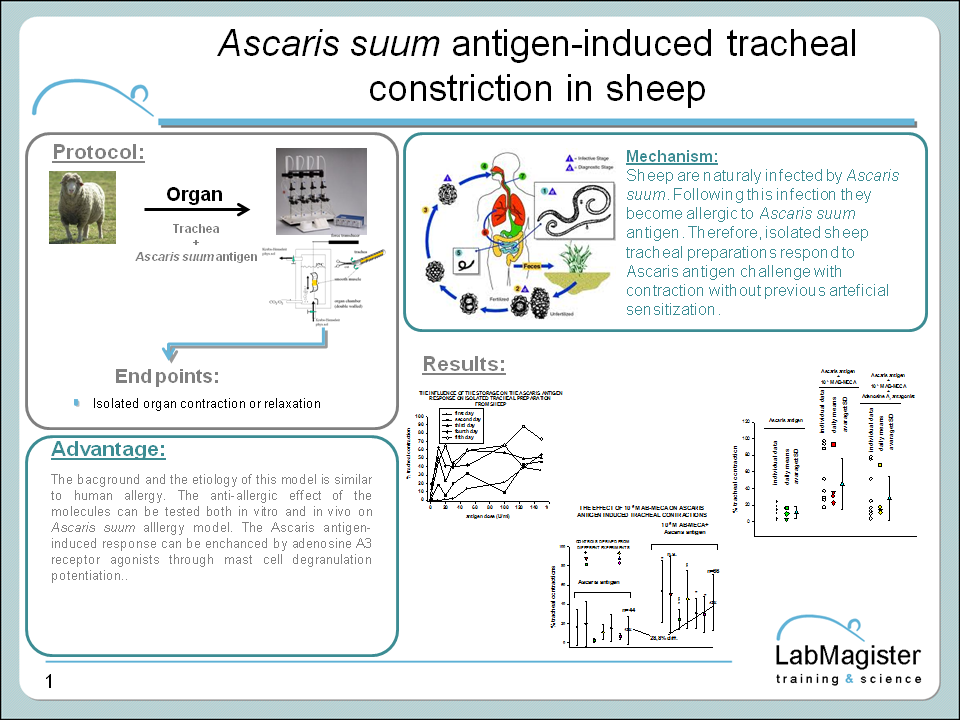 Ascaris antigen-induced tracheal construction model