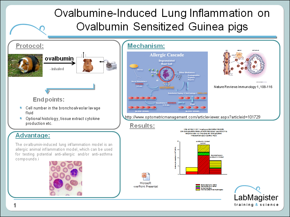 ovalbumin induced lung inflammation in GP