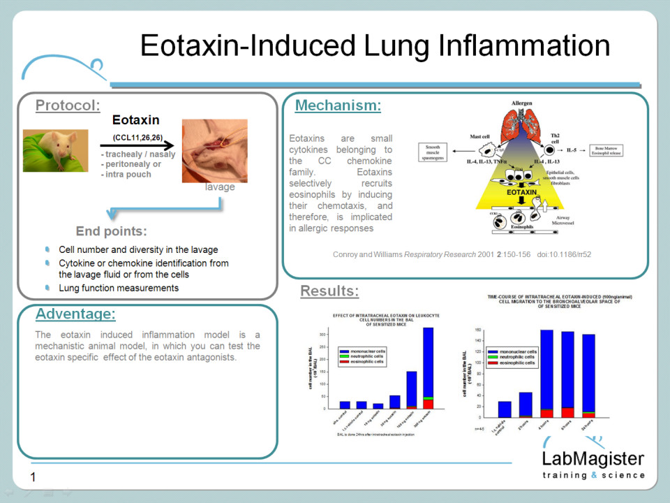 Eotaxin-induced inflammation