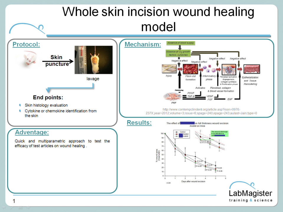 Whole skin inscision model